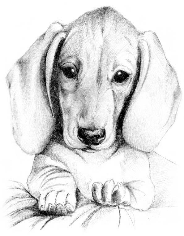 Nergio dalla parte del cane educazione cani educazione for Educazione cane